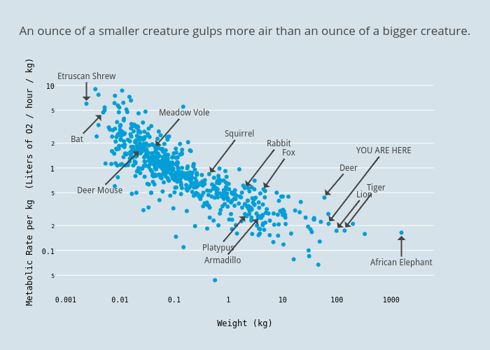 An ounce of a smaller creature gulps more air than an ounce of a bigger creature. | scatter chart made by Aatish | plotly